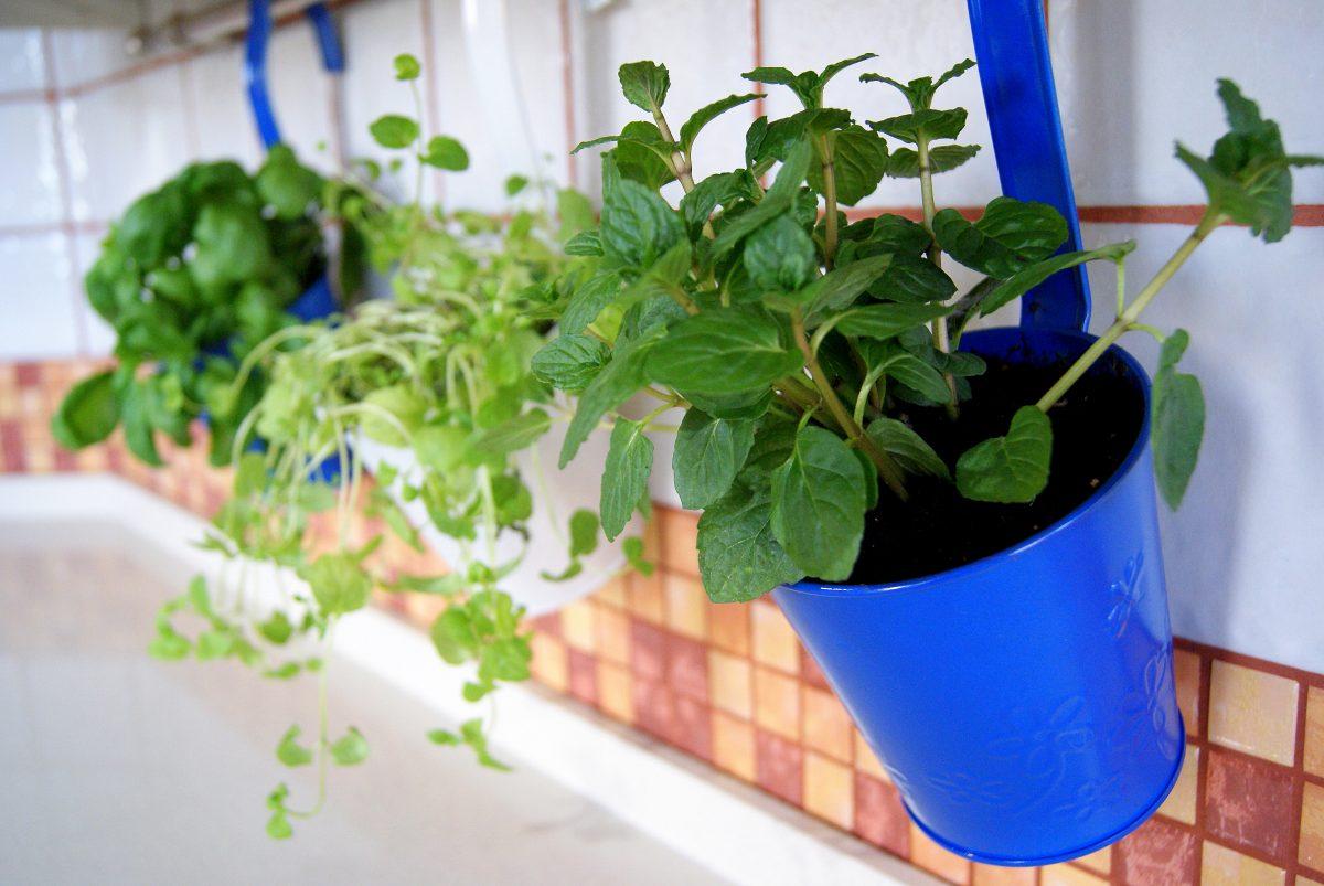 Rośliny i zioła w kuchni