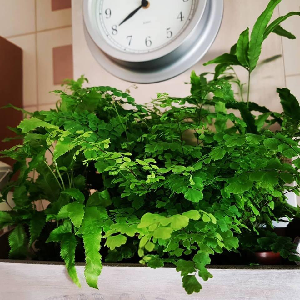 Rosliny I Ziola W Kuchni Aranzacje Drewland