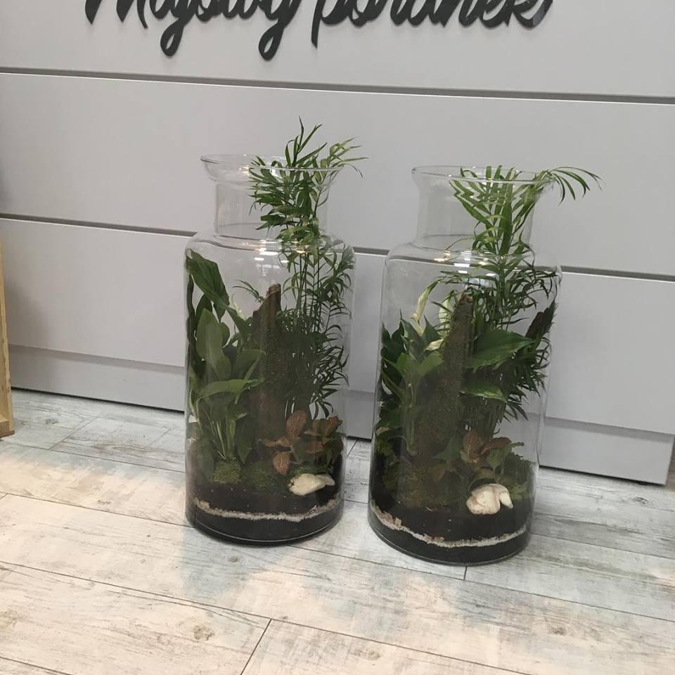 rośliny zielone w kuchni