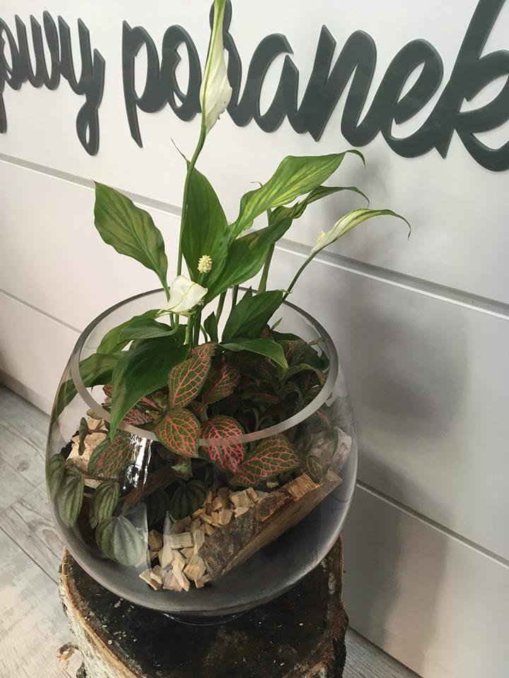 rośliny zielone w słoju